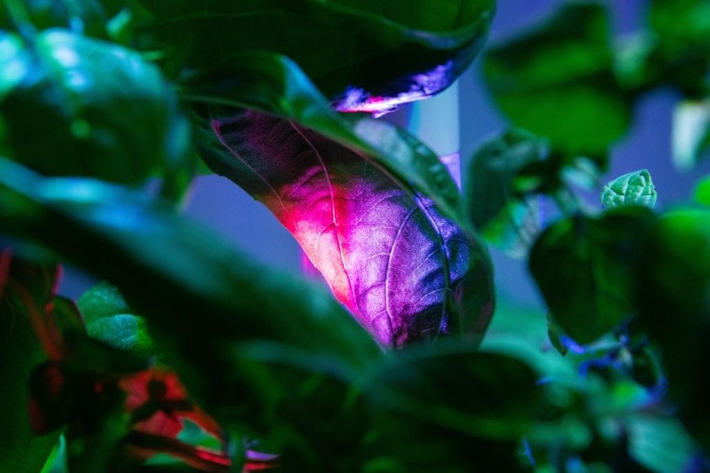 Plantui Smart Garden Boosting Height Block 04