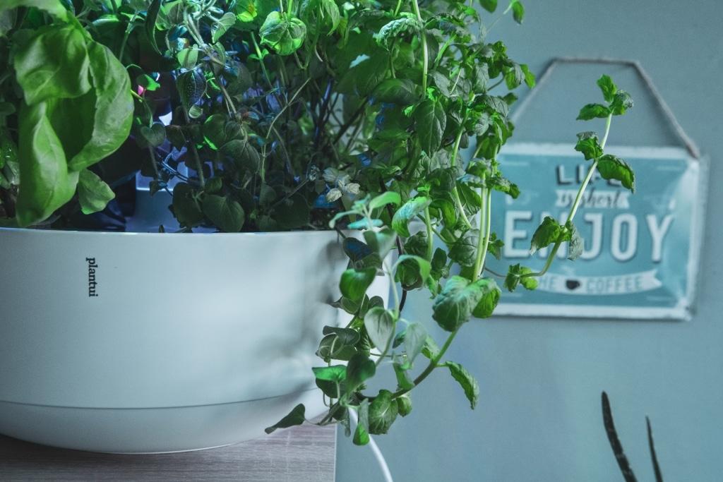 Plantui Smart Garden Bowl 01