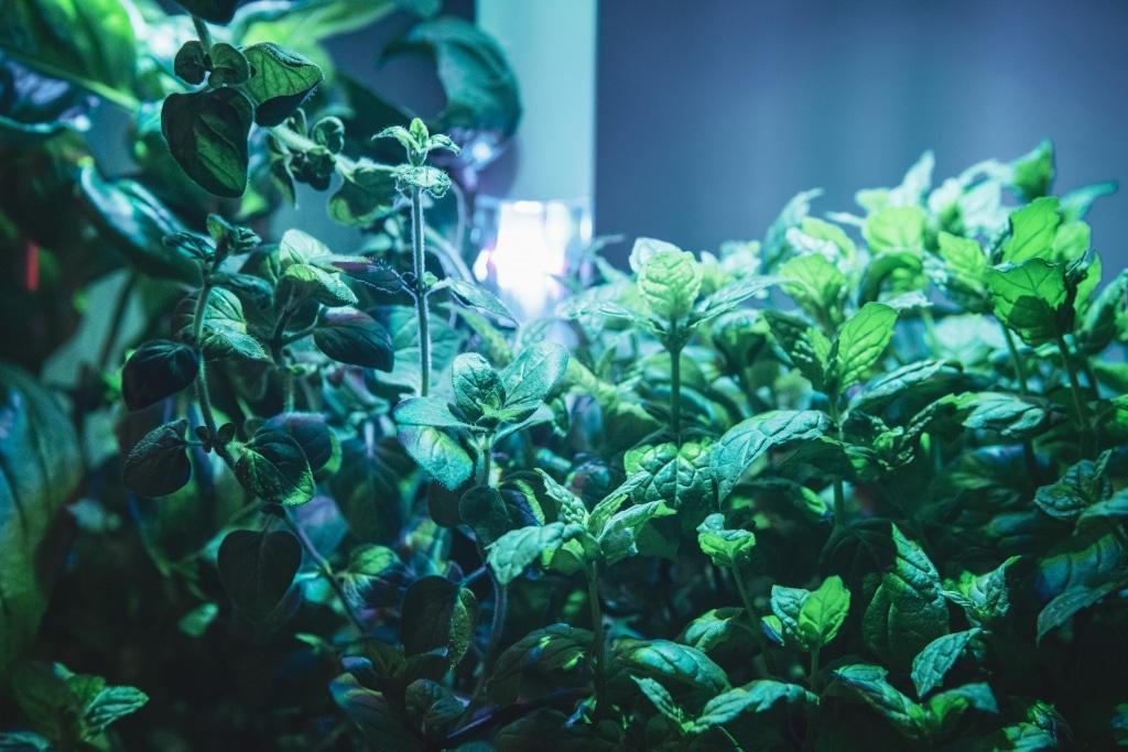 Plantui Smart Garden Plants Basil Oregano Mint 02