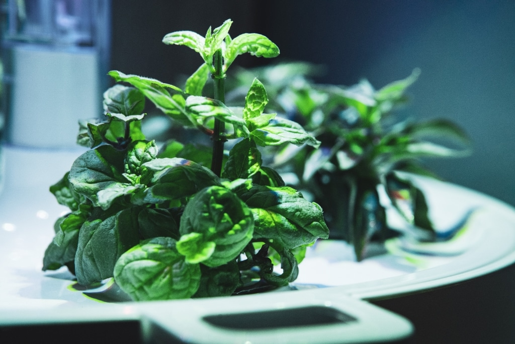 Plantui Smart Garden Plants Mint 02