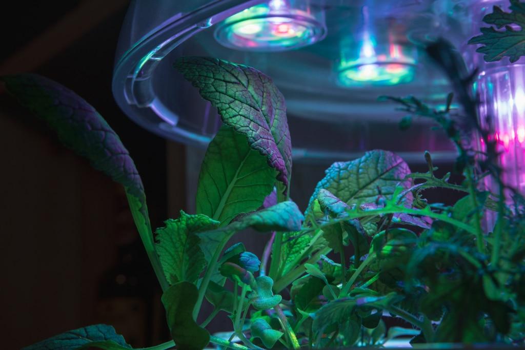 Plantui Smart Garden Plants Mustard Red Giant 01