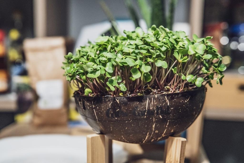 Grow Grow Nut Brokkoli 03