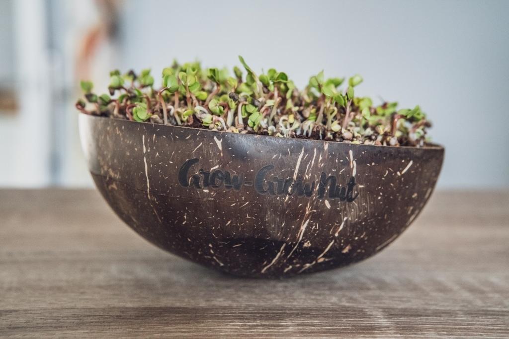 Grow Grow Nut Brokkoli 05