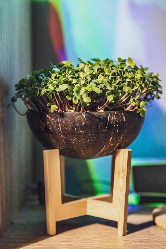 Grow Grow Nut Brokkoli 09
