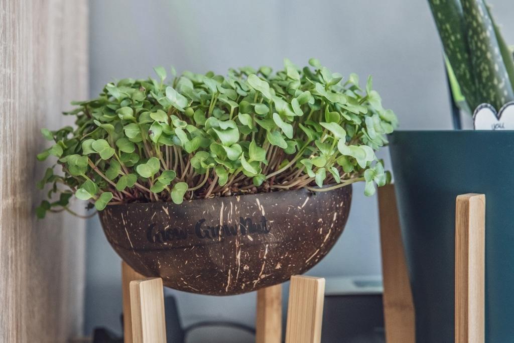 Grow Grow Nut Brokkoli 14