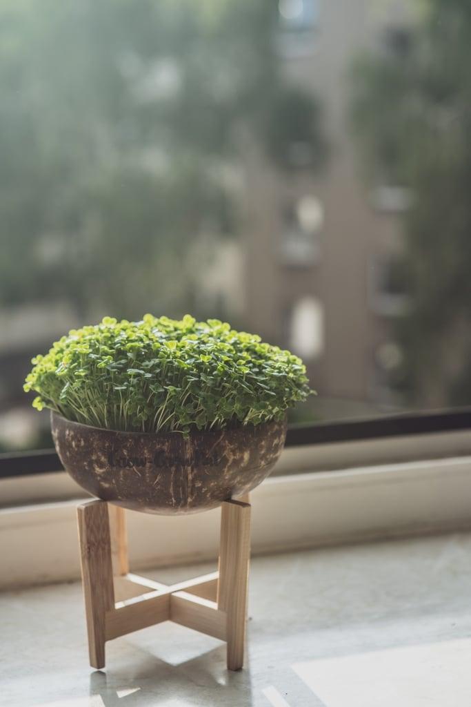Grow Grow Nut Brokkoli 15
